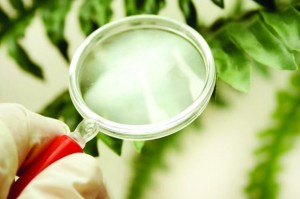 plant magnifying glass